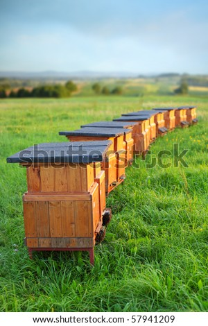 rural wooden beehives on meadow