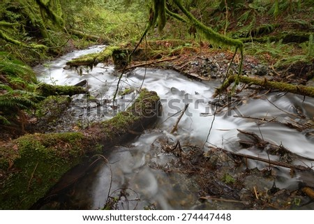 Rushing Rainforest Creek, Pacific Northwest. A rushing mountain stream in a Pacific Northwest rainforest. United States. - stock photo