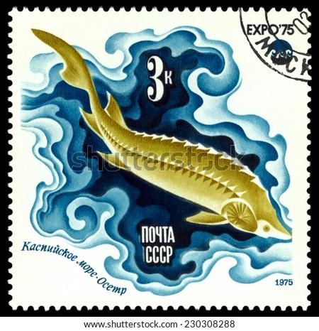 RUSSIA - CIRCA 1975: a stamp printed by Russia, show fish  Sturgeon, Caspian Sea, series, circa 1975 - stock photo
