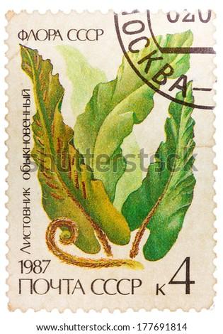 RUSSIA - CIRCA 1987: post stamp printed in USSR (CCCP, soviet union) shows image of harts tongue fern (Scolopendrium vulgare), Scott catalog 5572 A2679 4k green, circa 1987 - stock photo