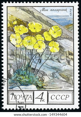 RUSSIA - CIRCA 1975: post stamp printed in USSR (CCCP, soviet union) shows image of polar poppies (papaver radicatum), Taiga from regional flowers series, Scott catalog 4394 A2090 4 yellow, circa 1975