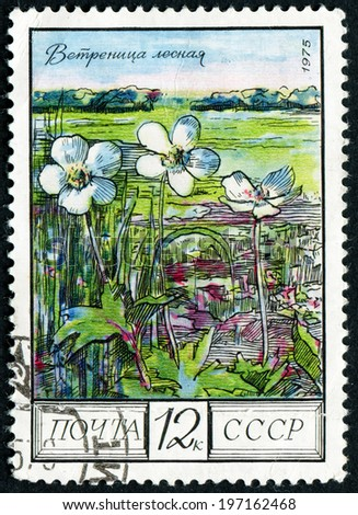 RUSSIA - CIRCA 1975: post stamp printed in USSR (CCCP, soviet union) shows image of wood anemones, steppe from regional flowers series, Scott catalog 4397 A2090 12k black multicolor, circa 1975 - stock photo