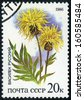RUSSIA  - circa 1986: stamp printed by Russia, shows flower circa 1986  - stock photo