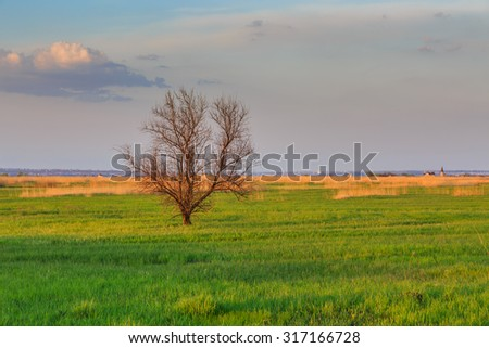 Russia. Rostov region. Delta spring. - stock photo