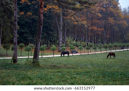 Russia. Stavropol region. Kislovodsk. Black horses walk in the Kislovodsk park.