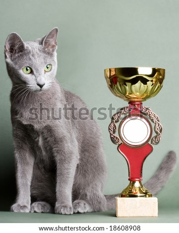 Russian blue cat with a cup - stock photo