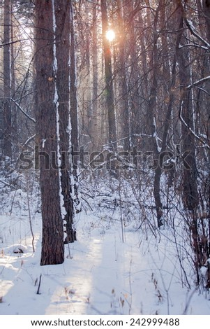 Russian cold winter forest landscape snow