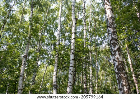 Russian Forest - stock photo