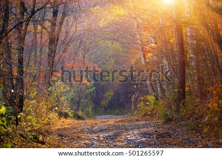 Russian forest autumn colors