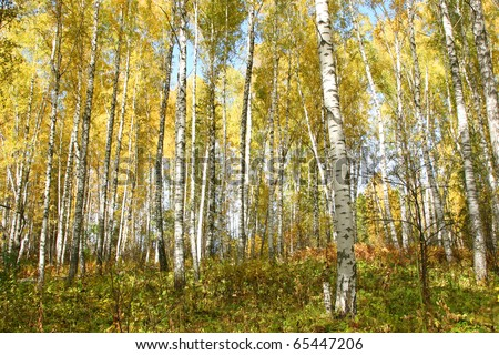 russian forest in autumn