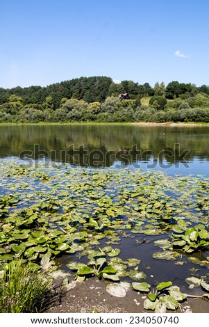 Russian river Oka pine forest on the opposite shore in Moscow region - stock photo