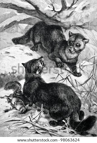"Russian sable hunting. Engraving by  Shneht . Published in magazine ""Niva"", publishing house A.F. Marx, St. Petersburg, Russia, 1888"