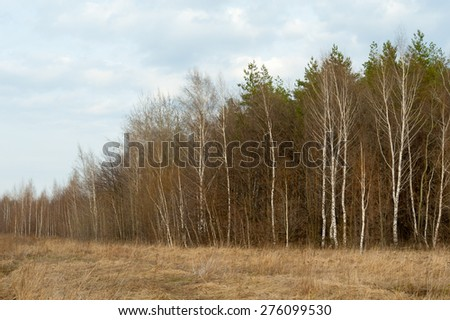 Russian spring landscape. Wood, birch, dry grass. - stock photo