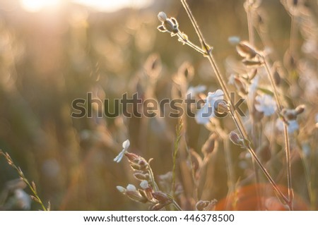 Russian wildflowers at sunset - stock photo