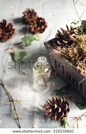 Rustic decorations: pine cones and green leaves set in a wooden box and a glass bottle. Natural light photo. Toned photo. Shallow focus. - stock photo
