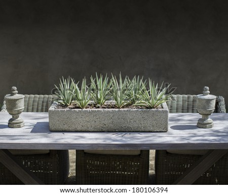 Rustic dining table and stone trough on outdoor garden table with Yuca plant.