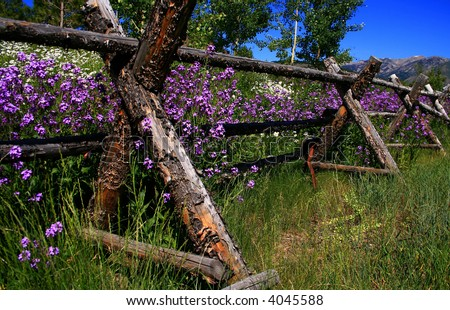 Rustic fence holding back spring wildflowers, Ketchum Idaho - stock photo