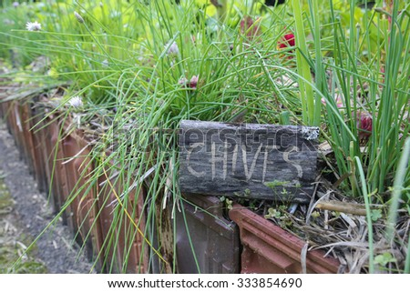 Rustic Herb markers , Chives - stock photo
