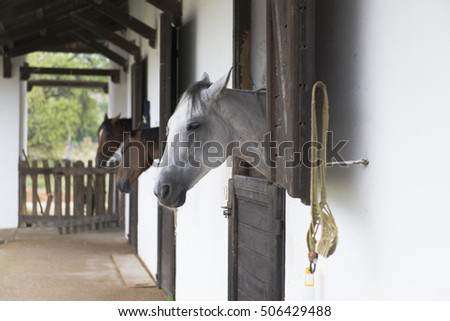 rustic horse in the stables