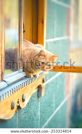 Rustic orange cat sitting behind a wooden house - stock photo
