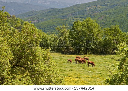 Rustic scenery at Pindos mountains in Europe, Greece - stock photo