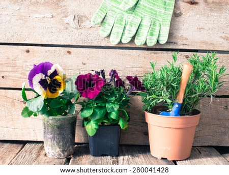 Rustic table with flower pots, potting soil, trowel  - stock photo