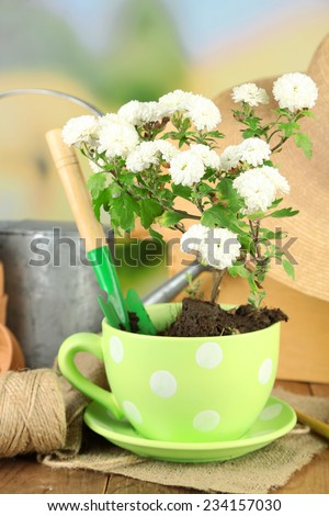 Rustic table with flowers, pots, potting soil, watering can and plants. Planting flowers concept - stock photo