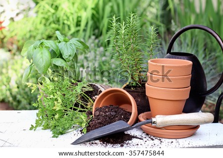 Rustic table with terracotta pots, potting soil, trowel and herbs in front of a beautiful garden. Extreme shallow depth of field.
