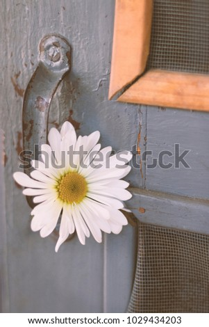 Rustic White Flower