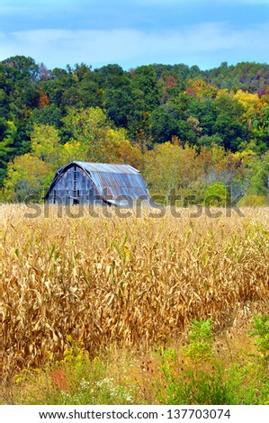Rustic, wooden and weathered barn sits in the middle of a cornfield.  Fall colors hillside behind barn. - stock photo