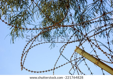 Rusty barbed and a tree. War and imprisonment concepts. - stock photo