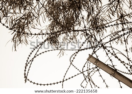 Rusty barbed and a tree. War and imprisonment concepts. Aged photo. Sepia. - stock photo