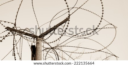 Rusty barbed wire against blue sky. A tree with bare twigs at background. War and imprisonment concepts. Aged photo. Sepia. - stock photo
