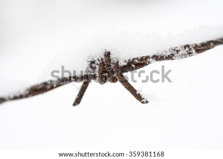 Rusty barbed wire covered in snow / Barbed wire fence detail with snow / Rusted barbed wire and snow - stock photo