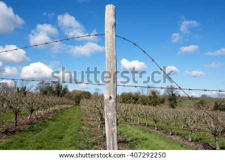 Rusty barbed wire fence around an orchard. The fence post is positioned in the center of the picture. - stock photo