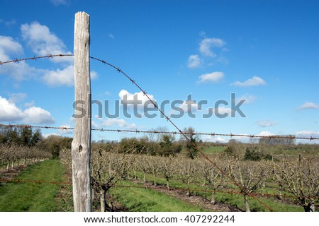 Rusty barbed wire fence around an orchard. The fence post is positioned to the left of the picture. - stock photo
