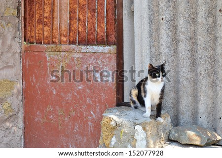 rusty gate and a cat - stock photo