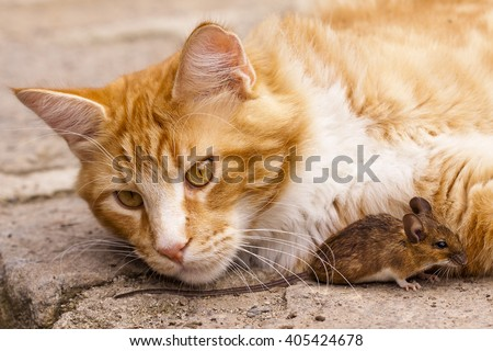 Rusty House Cat with mouse, Cat plays with mouse, game between cat and mouse, predator versus prey, like Tom and Jerry