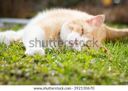 Rusty lovely cat relaxing on the huge botanic garden during beautiful spring sunset; looking happy (focus on head, color toned image) - stock photo