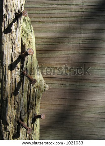 rusty nails in wood - stock photo