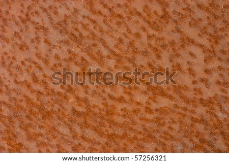 Rusty plate closeup - stock photo