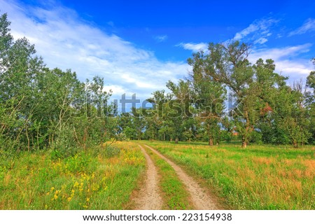 Rut road among meadow in summer forest - stock photo