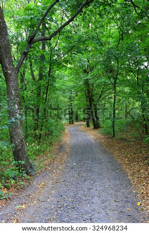 Rut road in green forest at early autumn time - stock photo