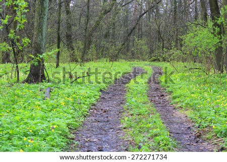 rut road in green spring forest - stock photo