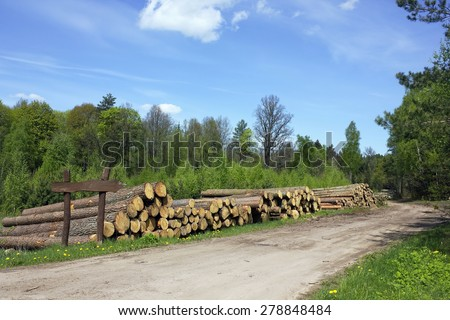 Ruthless deforestation  of the pine wood on logging landscape. Sunny spring day - stock photo