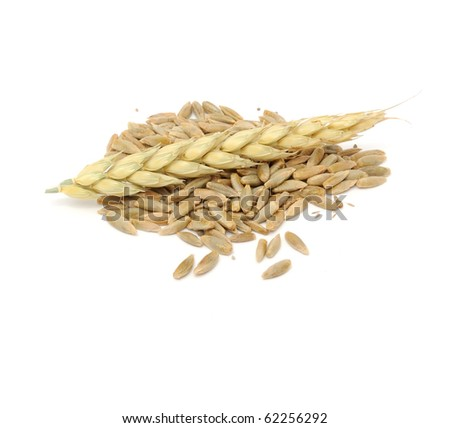 Rye Grains and Ear
