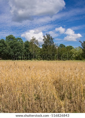 Rye (Secale cereale) is a grass grown extensively as a grain, a cover crop and as a forage crop.