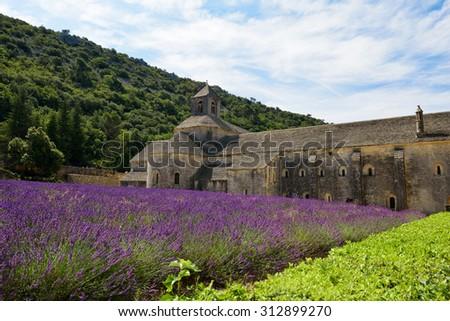 Sénanque abbey between lavender fields - stock photo