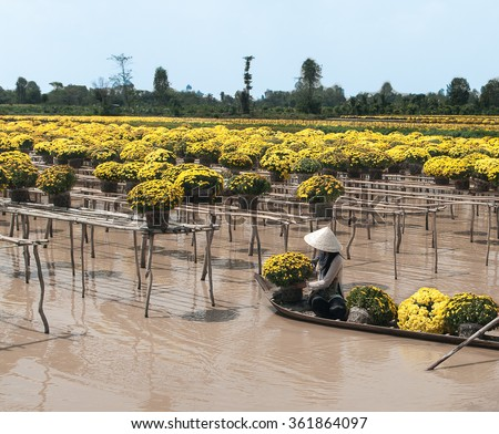 SA DEC, DONG THAP PROVINCE, VIETNAM - Feb 07, 2015: Unknown man in Vietnamese conical hat and traditional dress is using sampan to harvest flowers in Sa Dec Flower village. This is to prepare for Tet