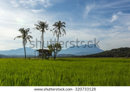 Sabah North Borneo Malaysian landscape with rice field and Mount Kinabalu at far background during morning.